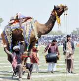 Lahorites may see Horse and Cattle Show by using free transport: Commissioner Lahore Abdullah Khan Sumbal